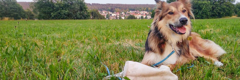 TeamH Hundeschule